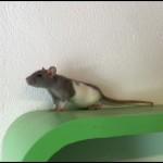 Miffy1